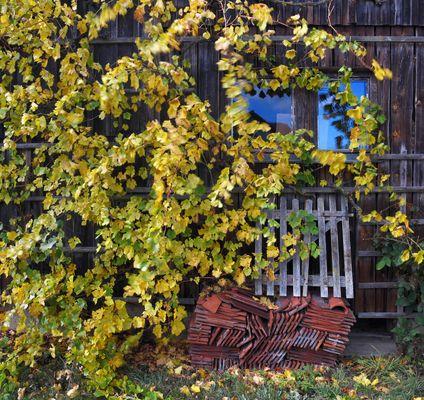 Herbstlaub Bild3