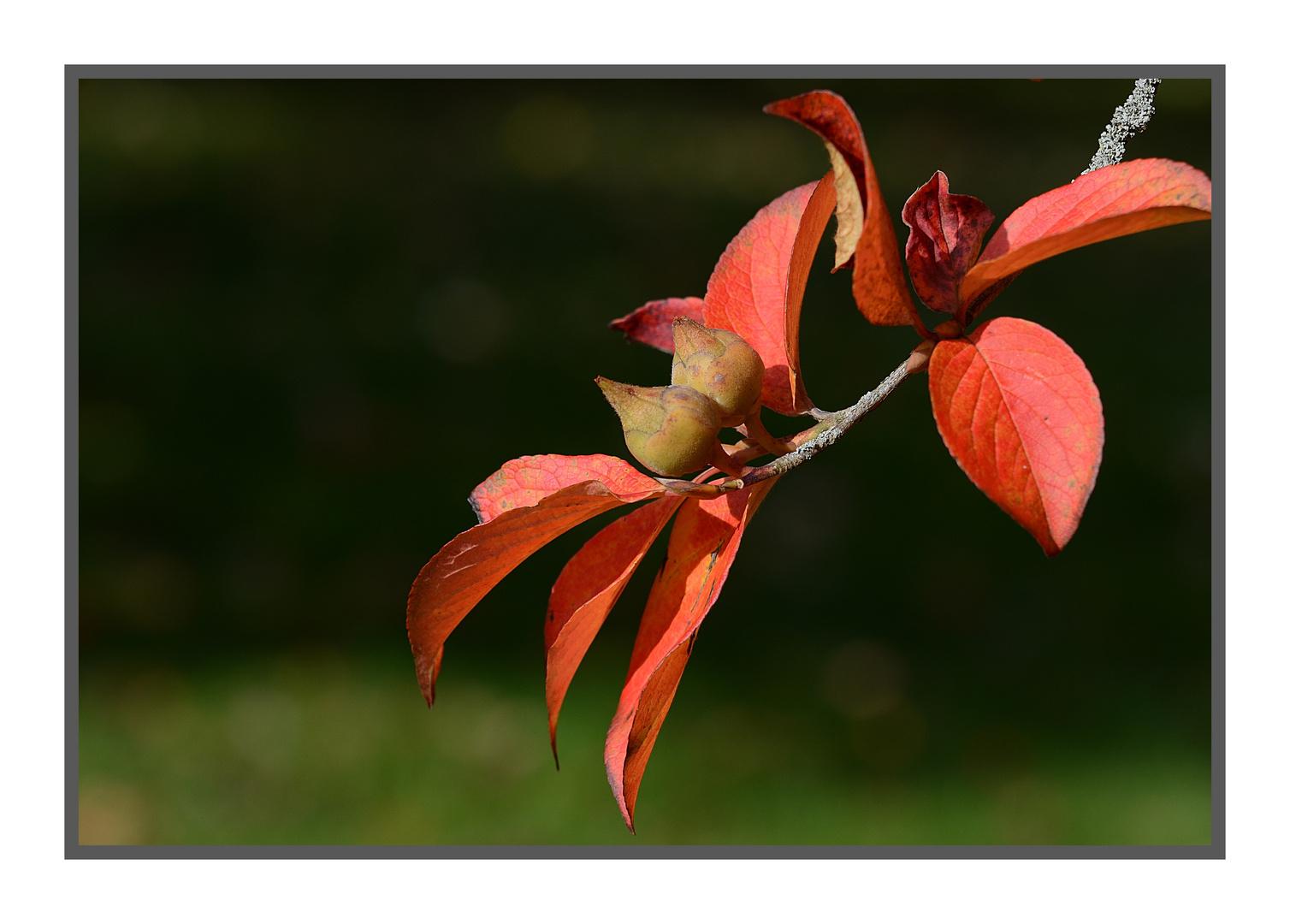 Herbstlaub......