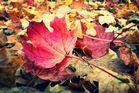 Herbstlaub I