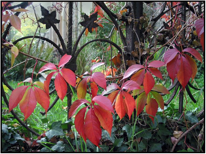 Herbstlaub II
