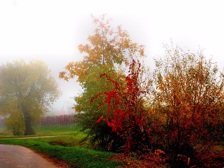Herbstlaub im Nebel