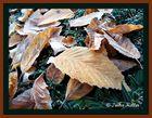 Herbstlaub im November