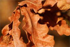 Herbstlaub in der ersten Frühlingssonne