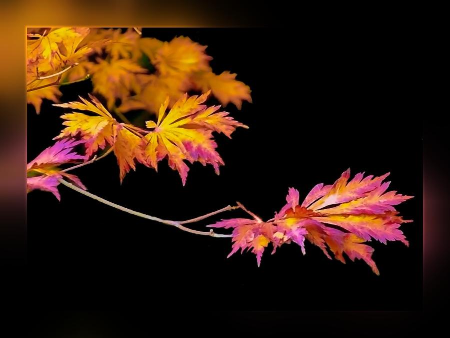 Herbstlaub . . . ., mal anders.