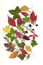 Herbstlaub-Scan