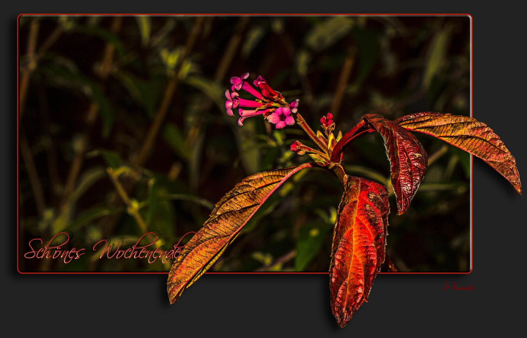 Herbstlaub und Blüten ....