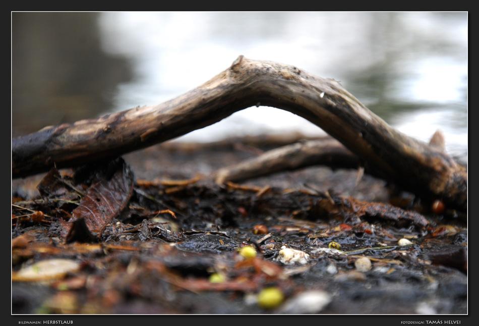 Herbstlaub (v4)