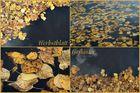 Herbstlaubgeflüster