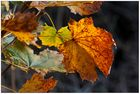 HerbstLaubLeuchten