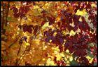 Herbstleiden 2