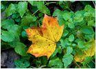 Herbstleuchten #2
