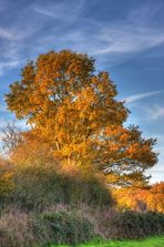 Herbstleuchten 2  Update