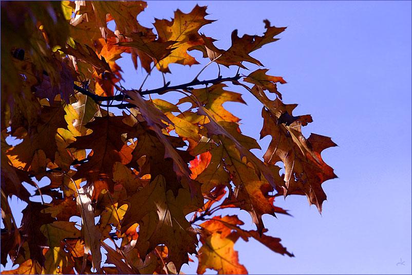 Herbst***leuchten