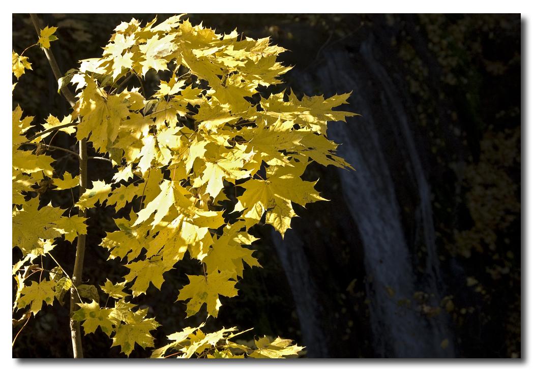 Herbstleuchten...