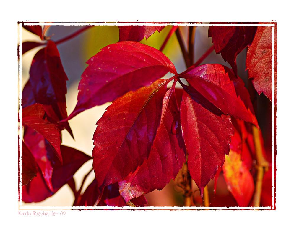 ... Herbstleuchten .............