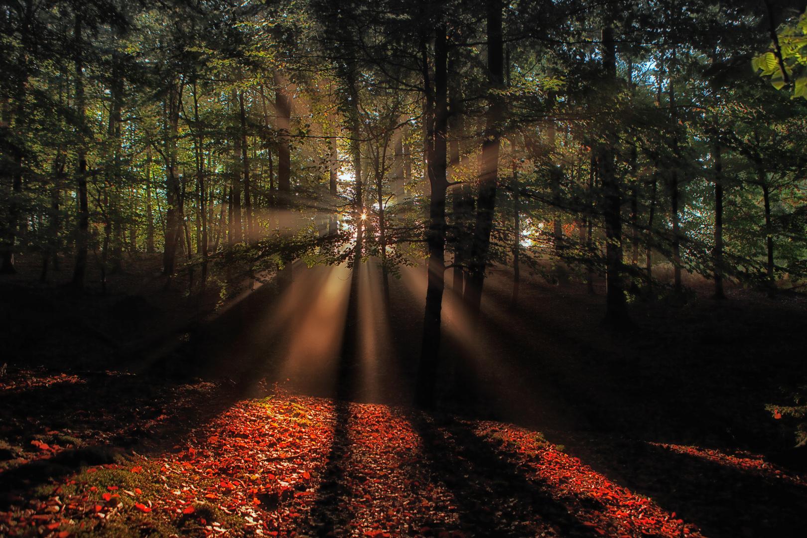 -Herbstleuchten-