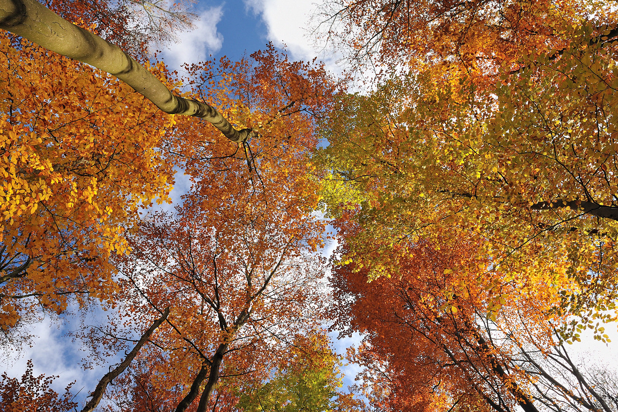 *Herbstleuchten im Meulenwald*