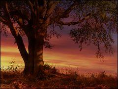 Herbstlich,,,