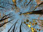 Herbstlich Blau