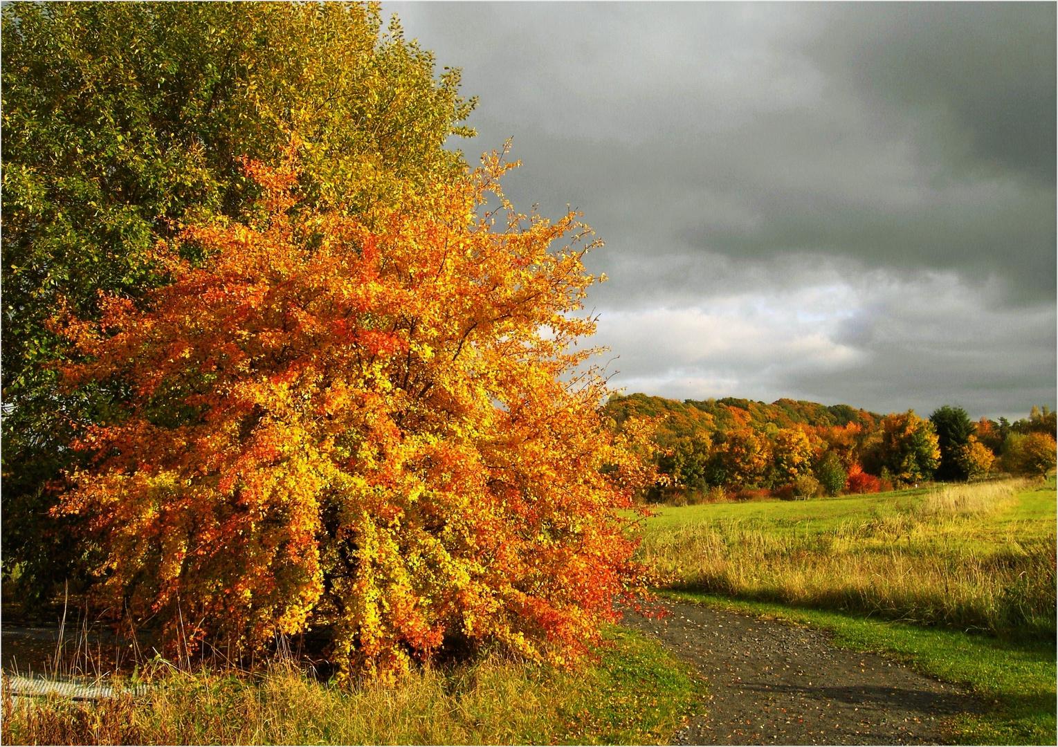 Herbstlich ...