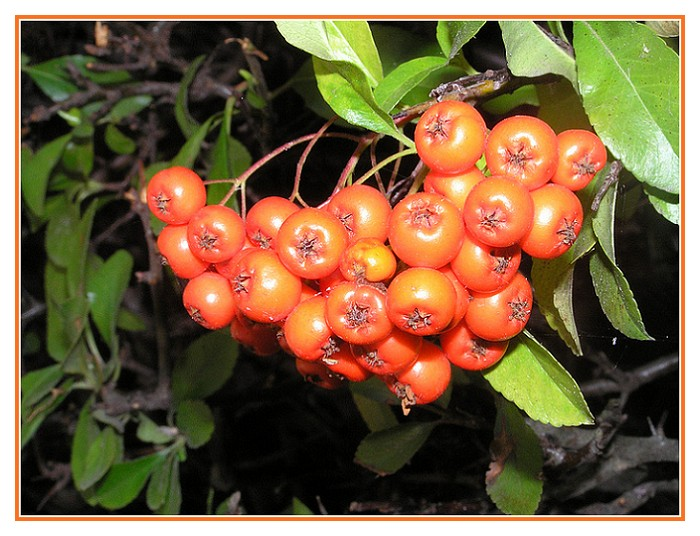 Herbstlich fruchtig