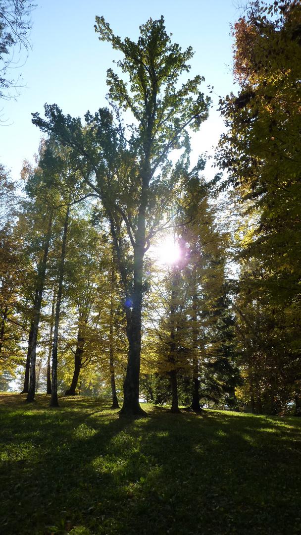 herbstlich im Toskana-Park Gmunden