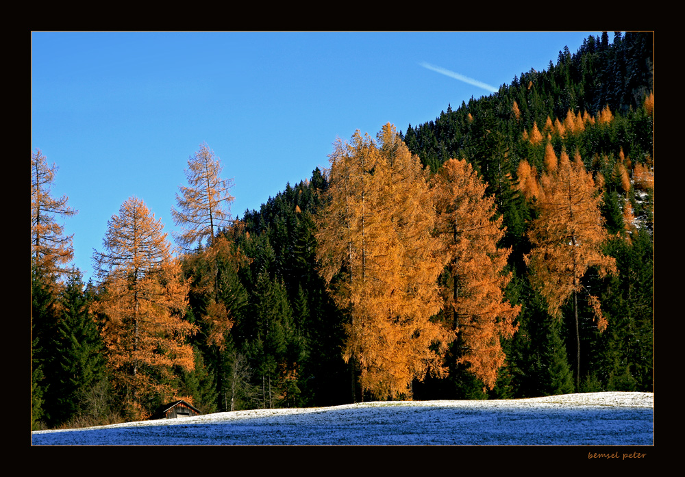 Herbstlich leuchtende Lärchen