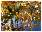 Herbstlich luftig