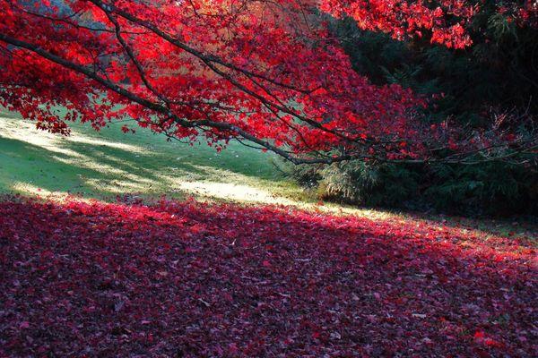 Herbstlich( t )