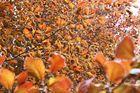Herbstlich - t