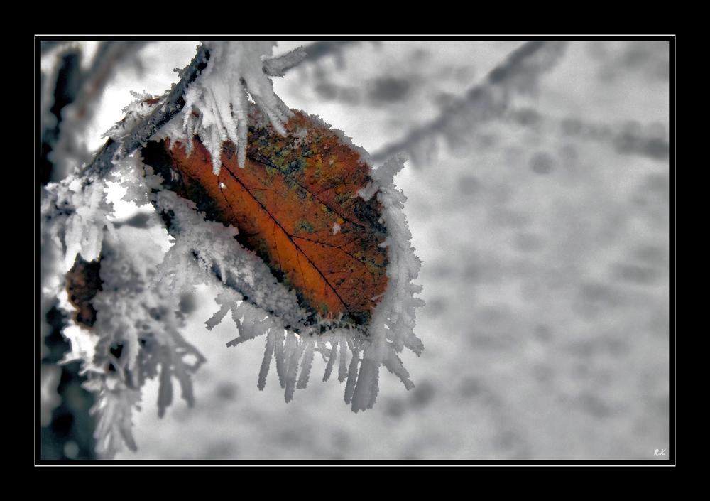 Herbstlich... Winterlich