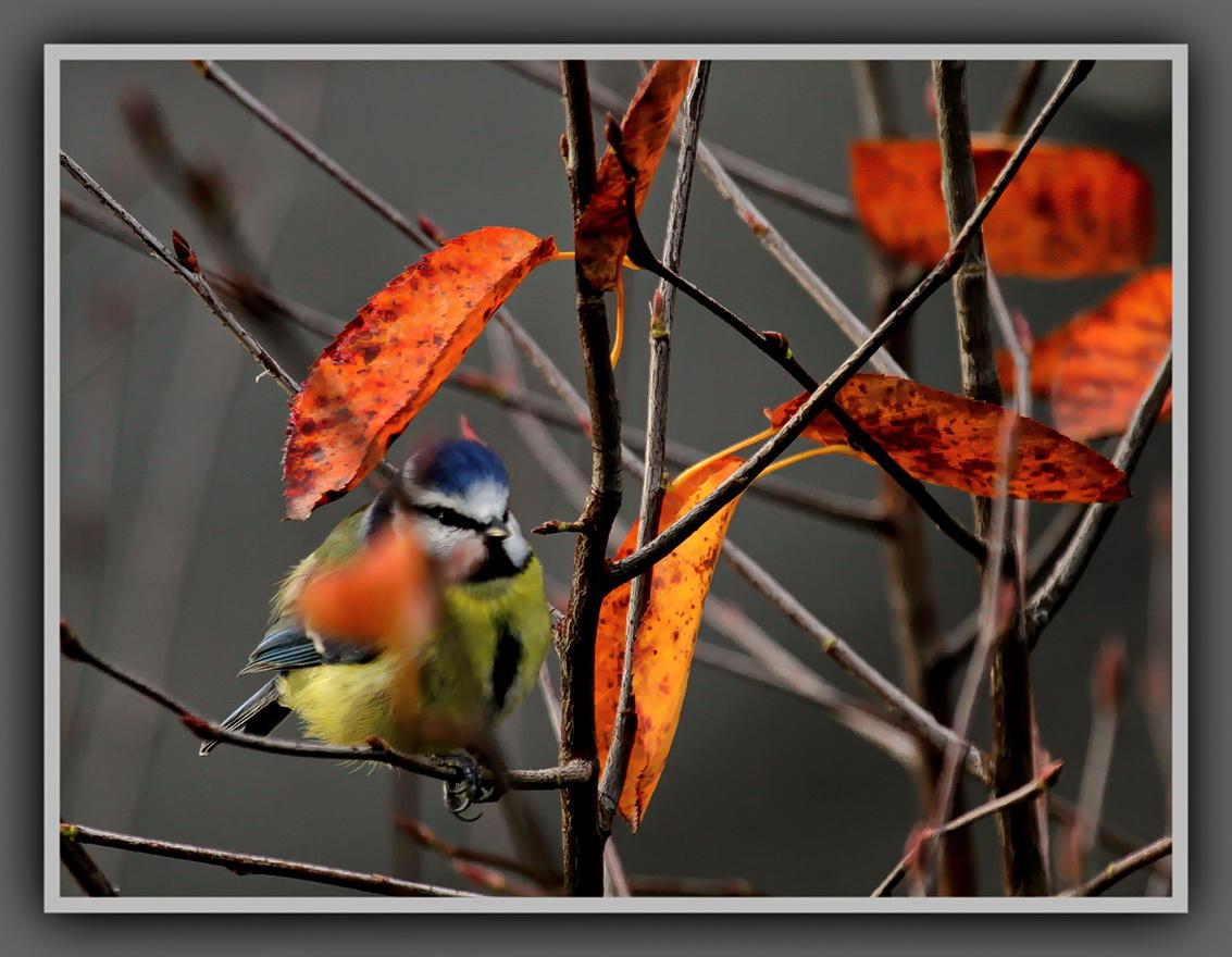 Herbstlich3