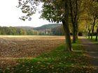 Herbstliche Allee bei Odenthal