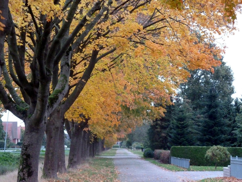 Herbstliche Allee in Ostfriesland