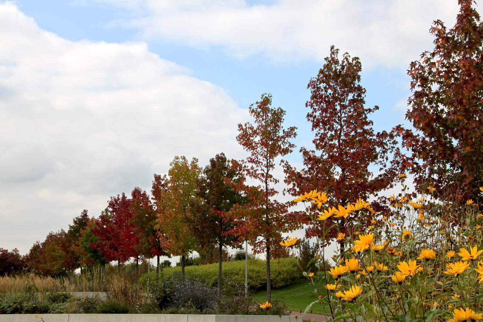 Herbstliche Baumallee