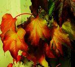 Herbstliche Blätter 2