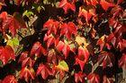 herbstliche Blätter