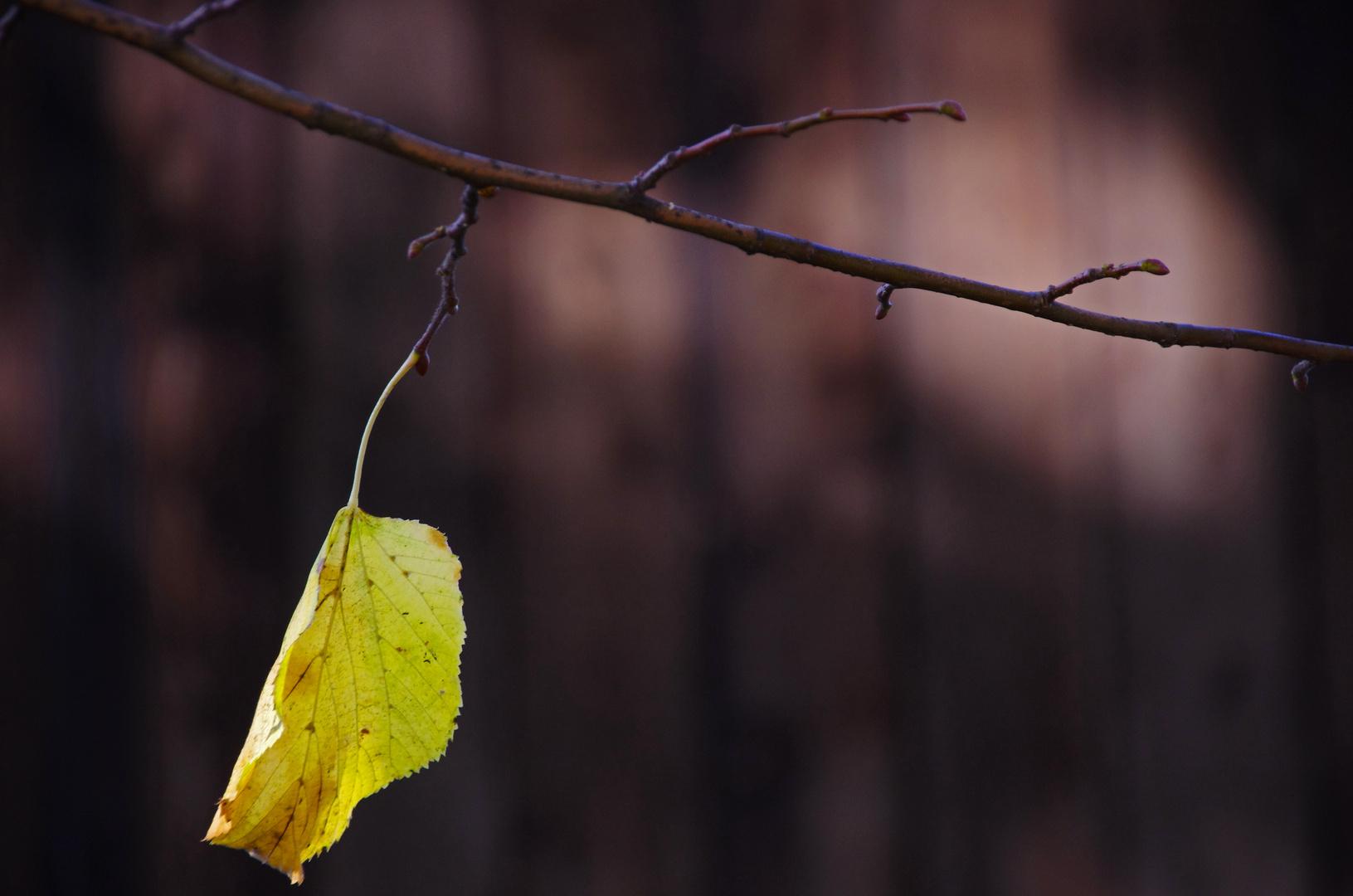 Herbstliche Einsamkeit
