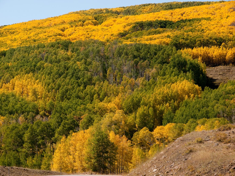Herbstliche Farben in den Boulder Mountains