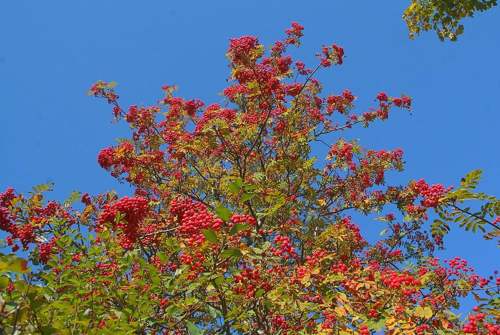 Herbstliche Farbenpracht