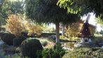Herbstliche Gartenanlage mit Mühle