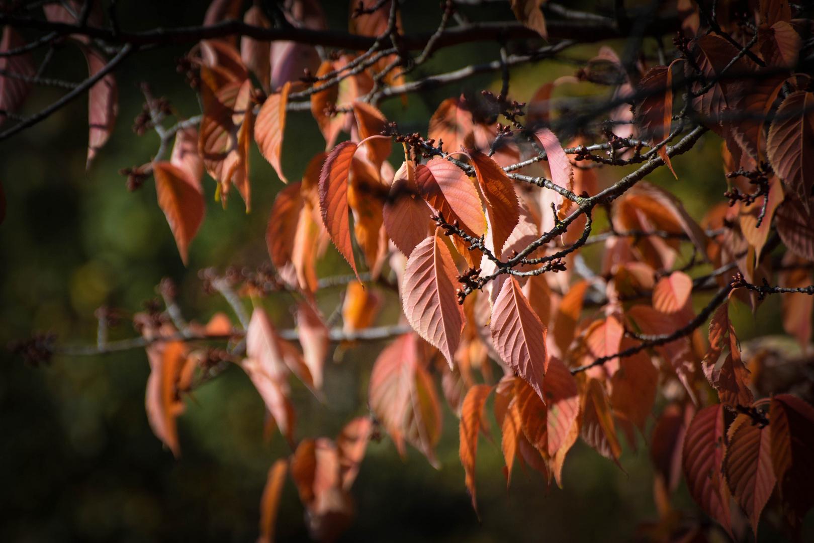 Herbstliche Gefühle.