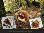 Herbstliche Genüsse...