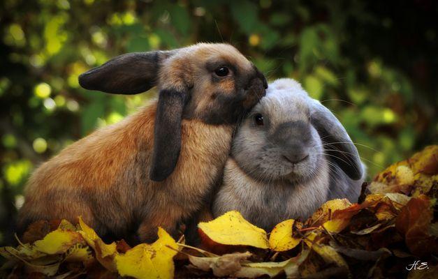 Herbstliche Hängeohren