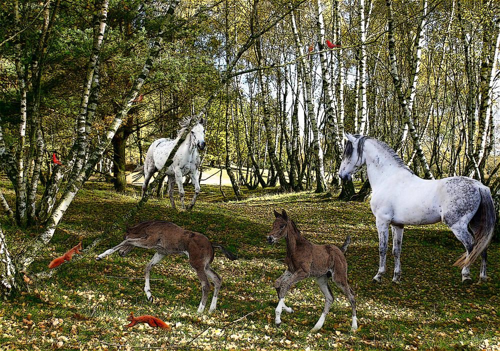 Herbstliche Heide, Collage
