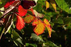 Herbstliche Impression 03