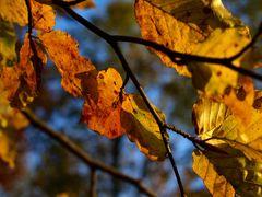 Herbstliche Impression 05