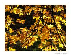 Herbstliche Impression 06