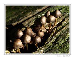 Herbstliche Impression 08