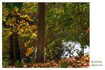 Herbstliche Impression (7)